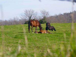 i cavalli della Tenuta di Santa Barbara