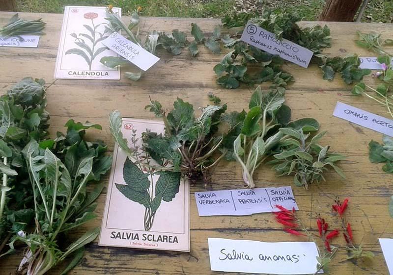 la festa della biodiversità e dell'agricoltura etica a Bracciano