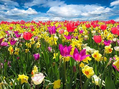 Festa di Primavera Bracciano 2019