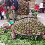 Sagra del Carciofo Romanesco Ladispoli 2018