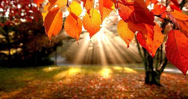 il bosco nel mese di novembre
