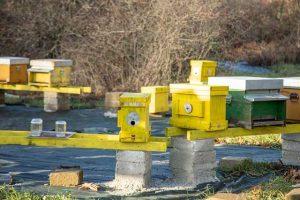 arnie dell'apiario didattico di Manziana